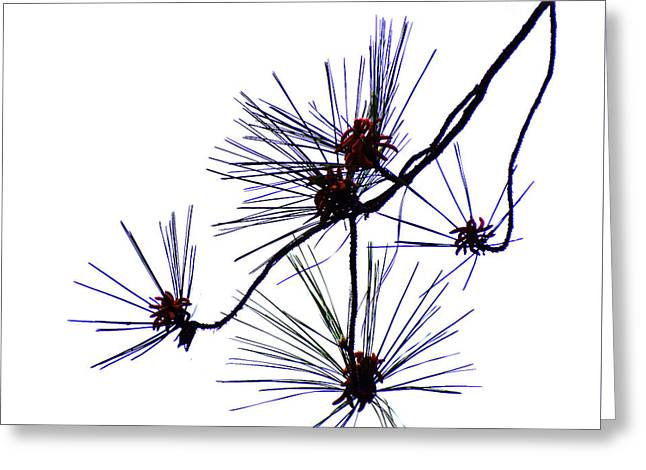 Pine Straw Greeting Card by Skip Willits
