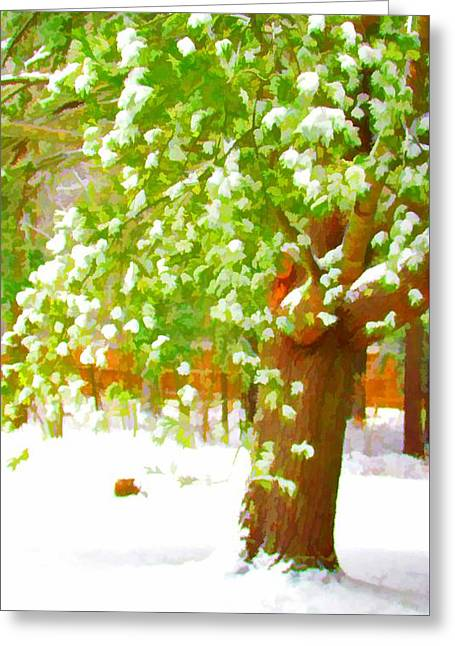 Pine Tree Covered With Snow 1 Greeting Card by Lanjee Chee