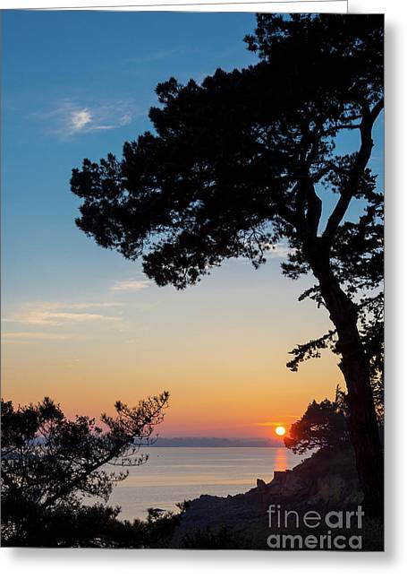 Pine Tree Greeting Card by Delphimages Photo Creations