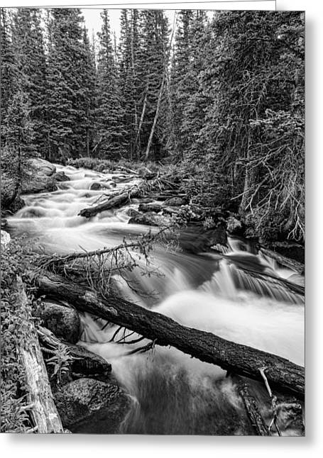 Beauty Creek Greeting Cards - Pine Tree Forest Creek Portrait In Black and White Greeting Card by James BO  Insogna
