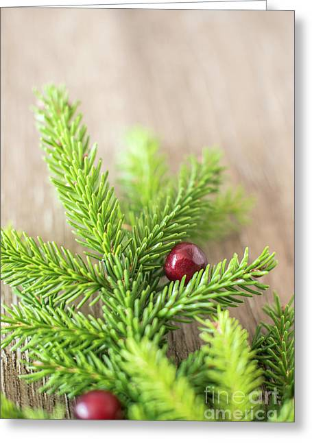 Pine Tree Needles Greeting Card by Taylor Martinsen
