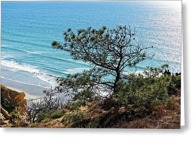 Pine Tree On Coast Greeting Card