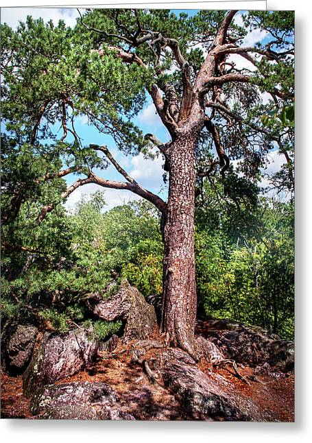 Pine Tree On Rocks Greeting Card by Jenny Rainbow