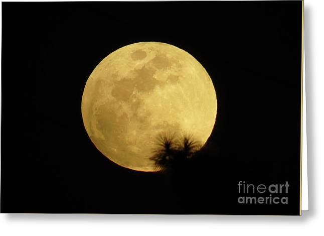 Pine Tree Silhouette Full Moon Greeting Card by D Hackett