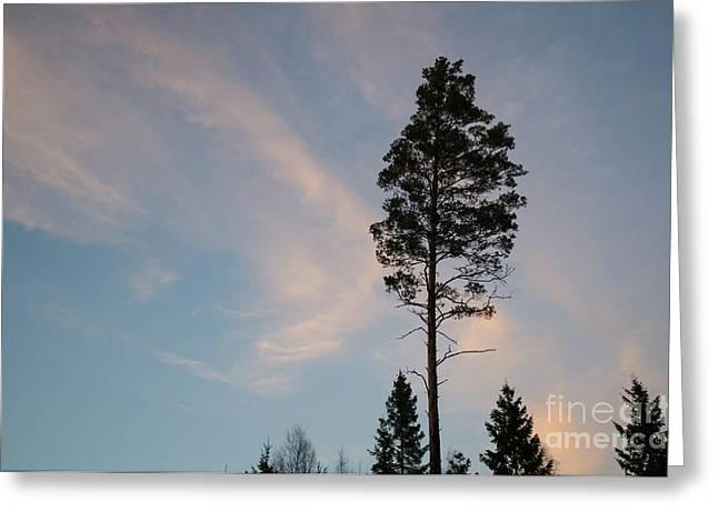 Pine Tree Silhouette Greeting Card by Kennerth and Birgitta Kullman
