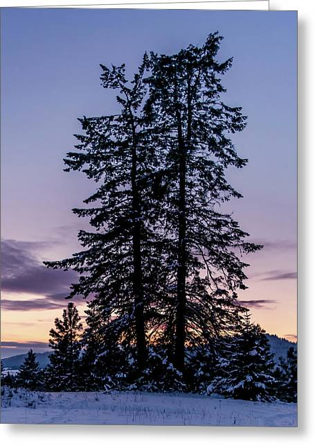 Pine Tree Silhouette    Greeting Card
