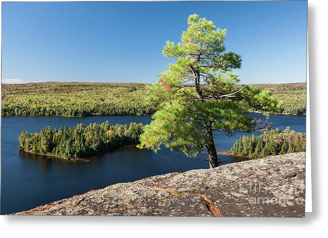 Greeting Card featuring the photograph Pine Tree With A View by Elena Elisseeva