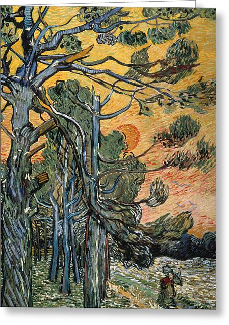 Pine Trees At Sunset Greeting Card by Vincent van Gogh