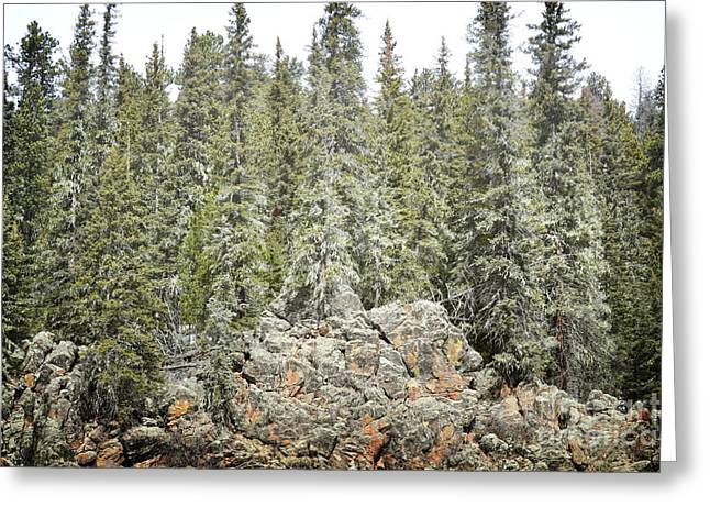Greeting Card featuring the photograph Pine Trees Rustic Mountain by Andrea Hazel Ihlefeld