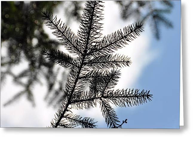Pine View Greeting Card by JAMART Photography