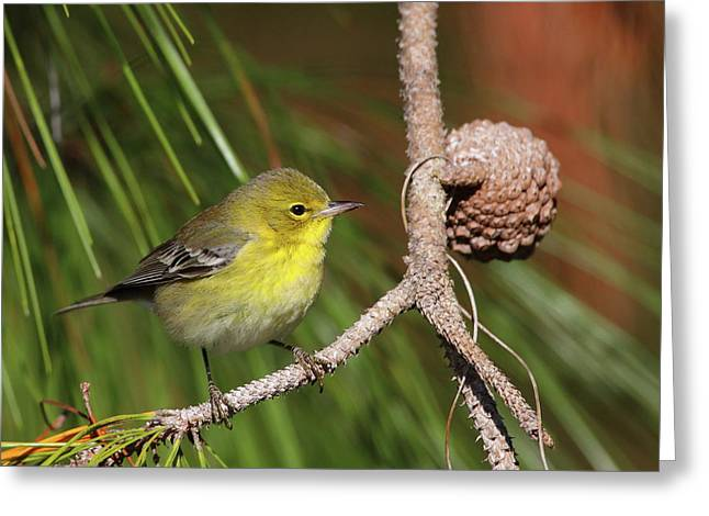 Pine Cones Greeting Cards - Pine Warbler Greeting Card by Bruce J Robinson