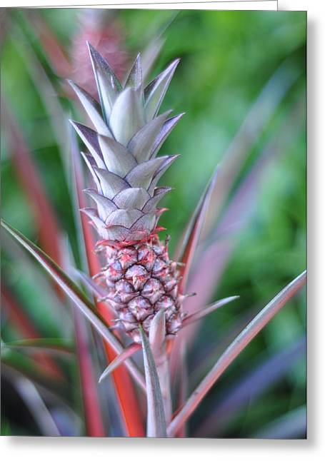 Pineapple Greeting Card by Kelly Wade