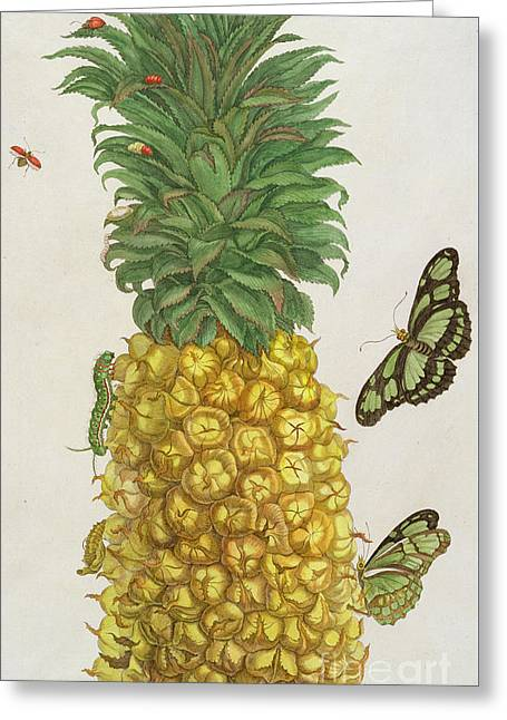 Pineapple With Caterpillar And Butterflies Greeting Card