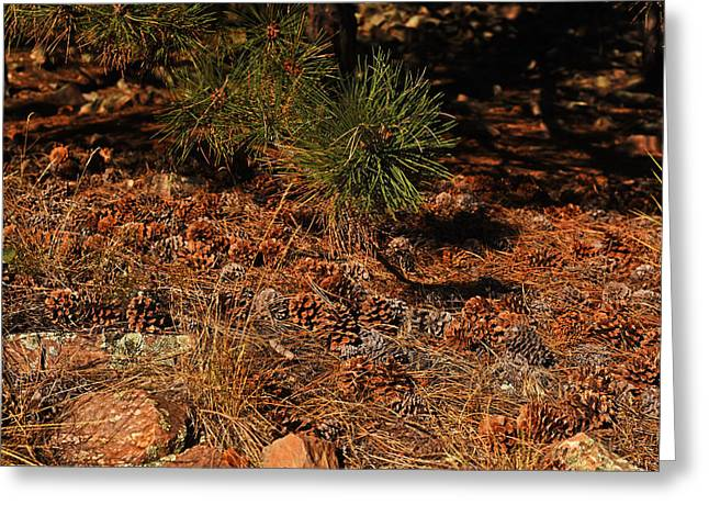 Pinecones Congregating On The Royal Arch Trail Boulder Co Greeting Card