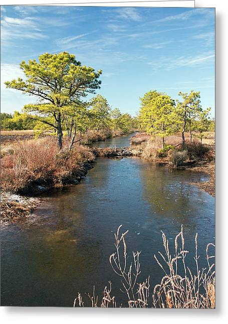 Pinelands Water Way Greeting Card