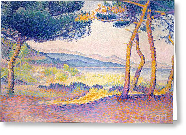 Pines Along The Shore, 1896 Greeting Card