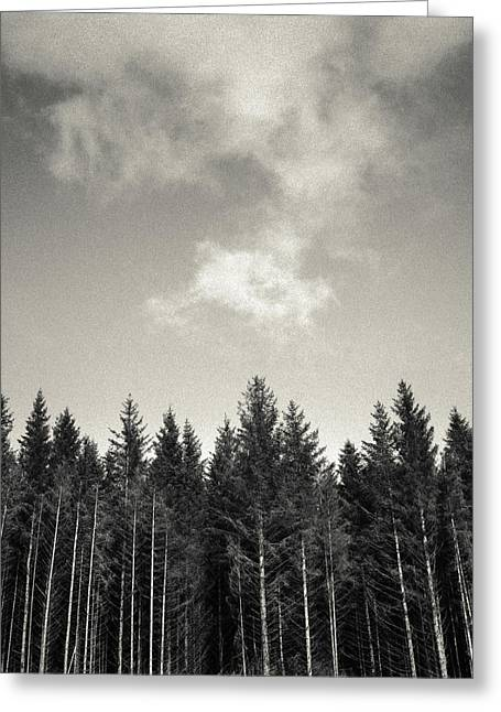 Pines And Clouds Greeting Card by Dave Bowman