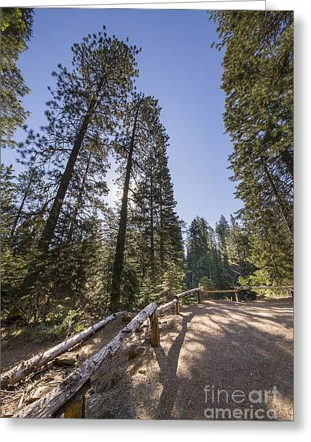 Pines At Denham Falls Overlook Greeting Card