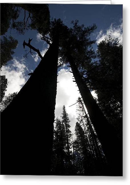 Pines Greeting Card by Chris Brewington Photography LLC