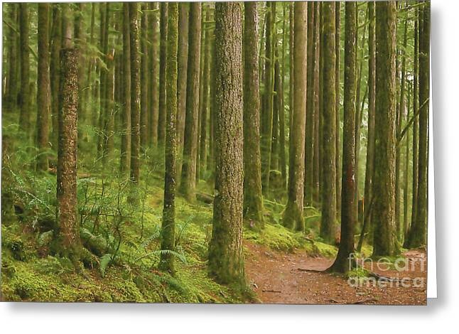 Pines Ferns And Moss Greeting Card