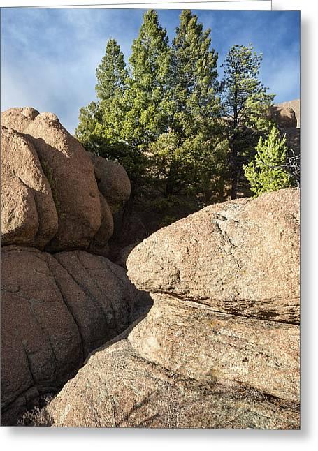 Pines In Granite Greeting Card