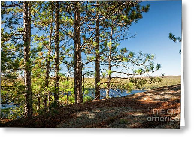 Greeting Card featuring the photograph Pines On Sunny Cliff by Elena Elisseeva