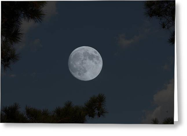 Piney Woods Moon Greeting Card by Betty Northcutt