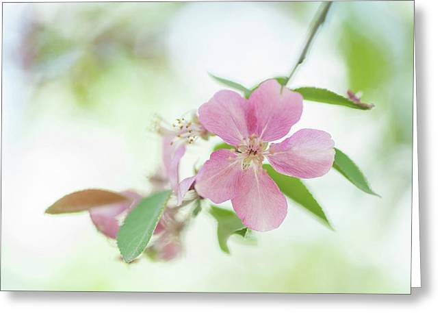 Pink Airy Marvel Greeting Card by Jenny Rainbow