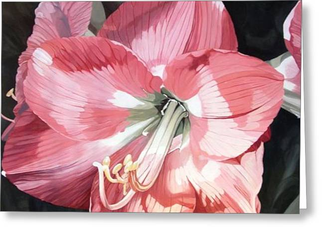 Pink Amaryllis Greeting Card