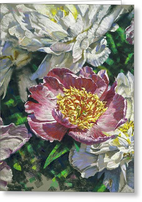 Pink Amid White Greeting Card