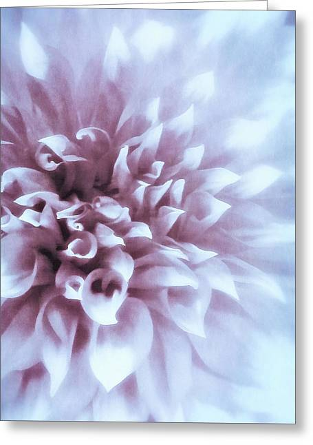Pink And Blue Dahlia Greeting Card
