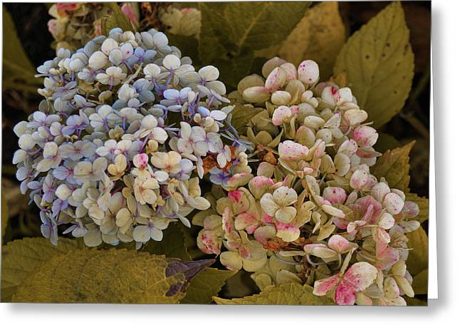 Pink And Blue Greeting Card by JAMART Photography
