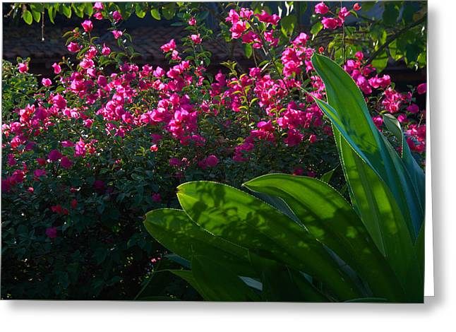 Pink And Green Greeting Card by Jim Walls PhotoArtist