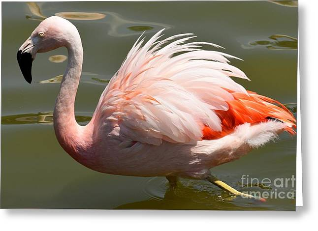 Pink And Proud Greeting Card by Jennifer Craft