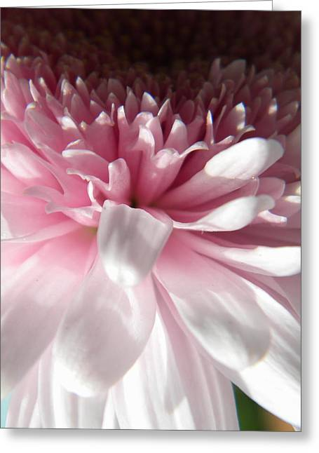 Pink And White Greeting Card by Alyona Firth