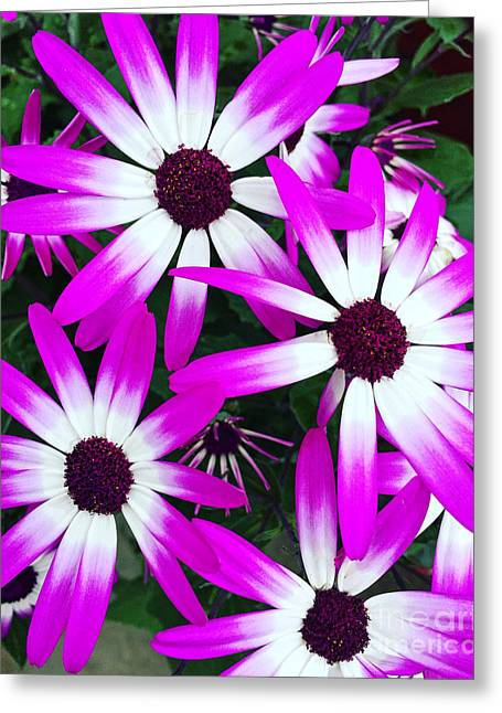 Pink And White Flowers Greeting Card by Vizual Studio