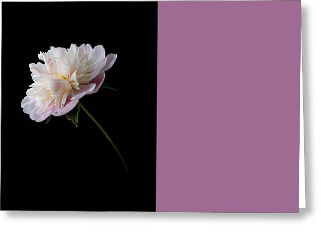 Pink And White Peony Greeting Card