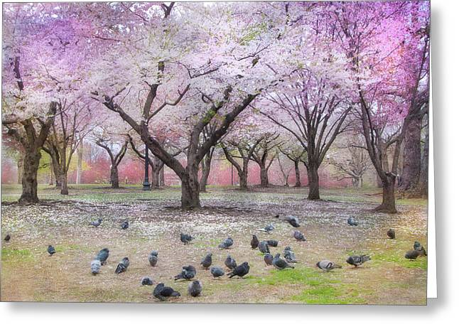 Greeting Card featuring the photograph Pink And White Spring Blossoms - Boston Common by Joann Vitali