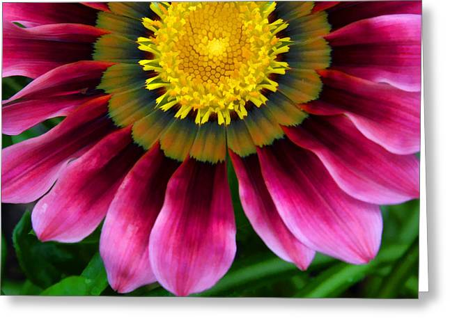 Pink And Yellow Greeting Card by Ann Bridges