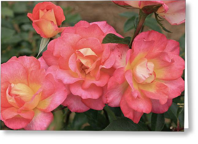 Pink And Yellow Greeting Card by Dennis Baswell