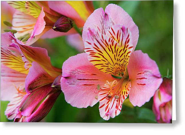 Pink And Yellow Flora Greeting Card