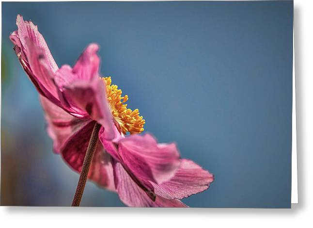 Pink And Yellow Profile #h8 Greeting Card