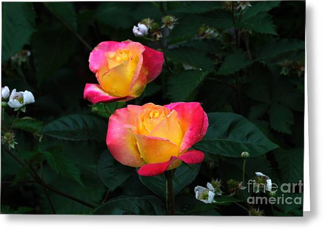 Pink And Yellow Rose With Raspberrys Greeting Card