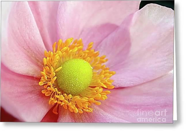 Pink Anemone Greeting Card by Kaye Menner