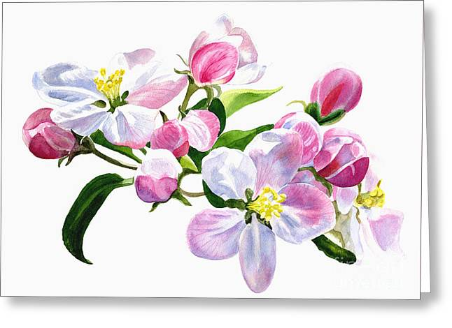 Pink Apple Blossoms Greeting Card