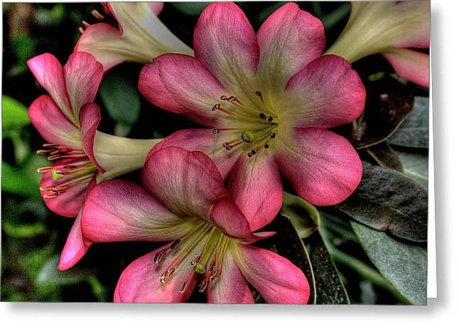 Pink Azalea Greeting Card by David Patterson