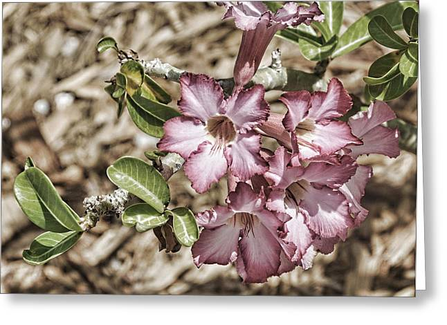 Pink Azalea II Greeting Card