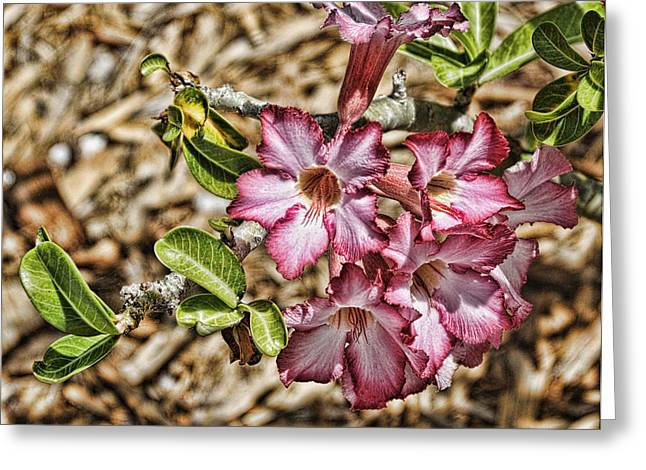 Pink Azalea IIi Greeting Card