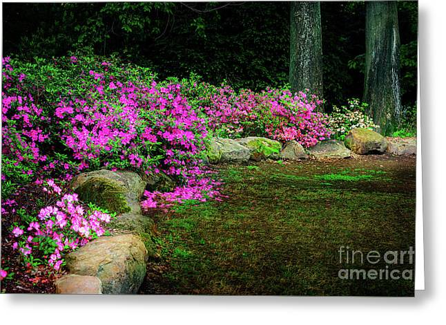Pink Azaleas At The Azalea Festival Greeting Card by Tamyra Ayles