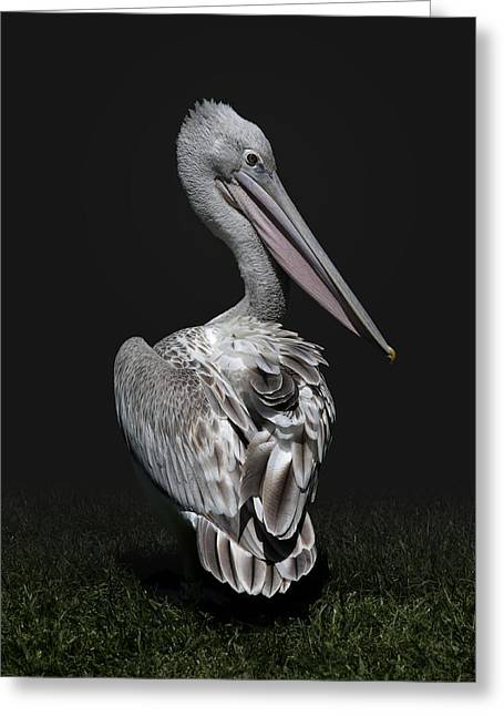 Pink-backed Pelican Rear View Greeting Card